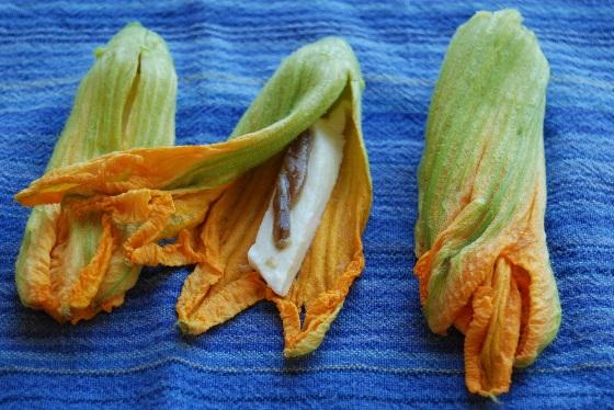 Zucchiniblüten, präpariert mit oder ohne Sardelle.