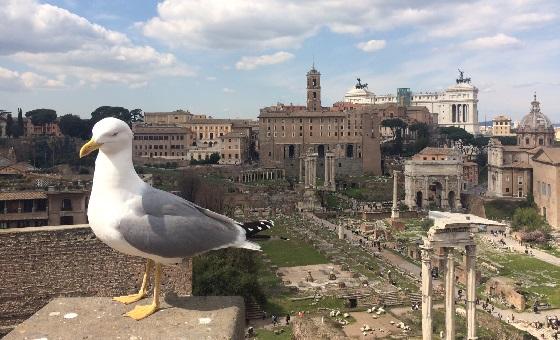 Ausblick vom Palatinhügel auf das Forum Romanum
