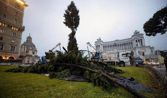 Römischer Weihnachtsbaum bei der Montage auf der Piazza Venezia